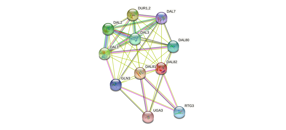 DAL82 protein (Saccharomyces cerevisiae) - STRING interaction network