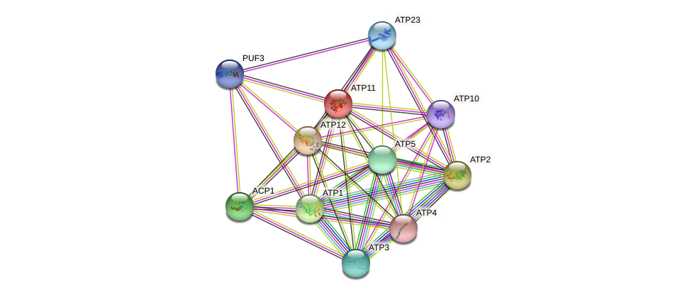 ATP11 protein (Saccharomyces cerevisiae) - STRING interaction network