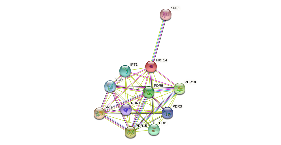 HXT14 protein (Saccharomyces cerevisiae) - STRING interaction network