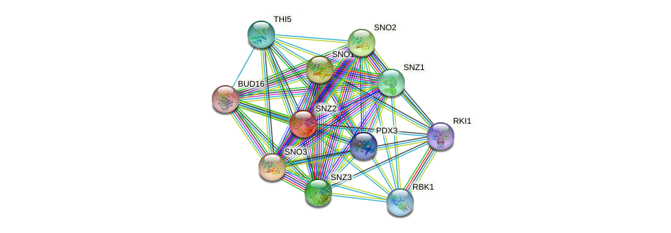 SNZ2 protein (Saccharomyces cerevisiae) - STRING interaction network