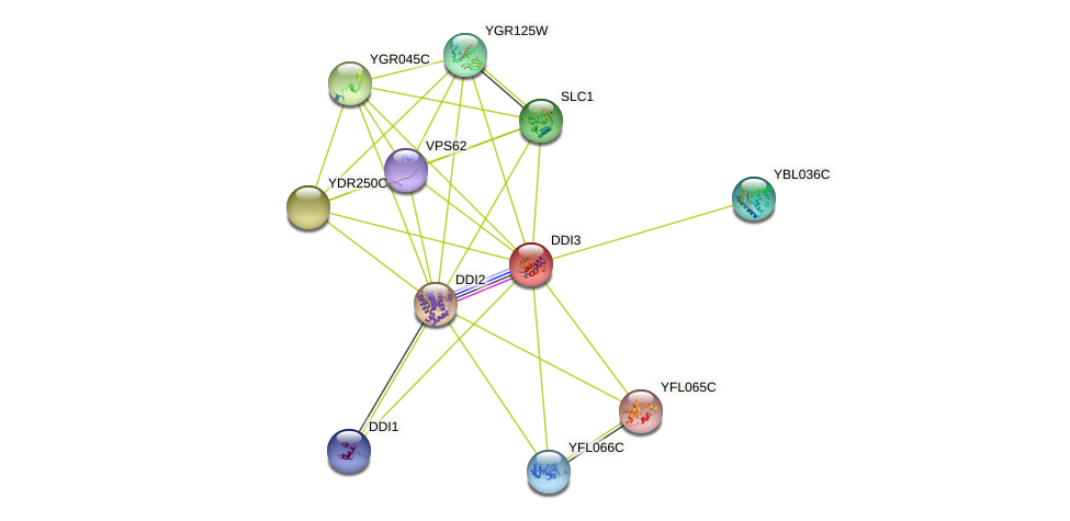 DDI3 protein (Saccharomyces cerevisiae) - STRING interaction network