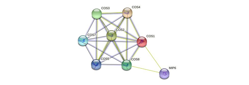 COS1 protein (Saccharomyces cerevisiae) - STRING interaction network