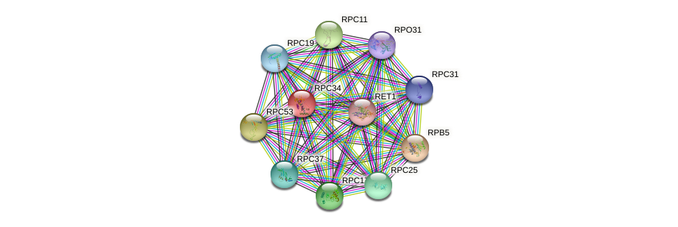 RPC34 protein (Saccharomyces cerevisiae) - STRING interaction network
