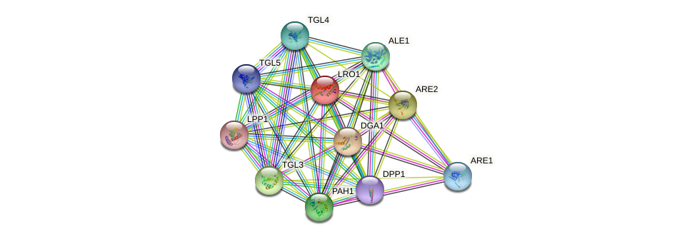 LRO1 protein (Saccharomyces cerevisiae) - STRING interaction network