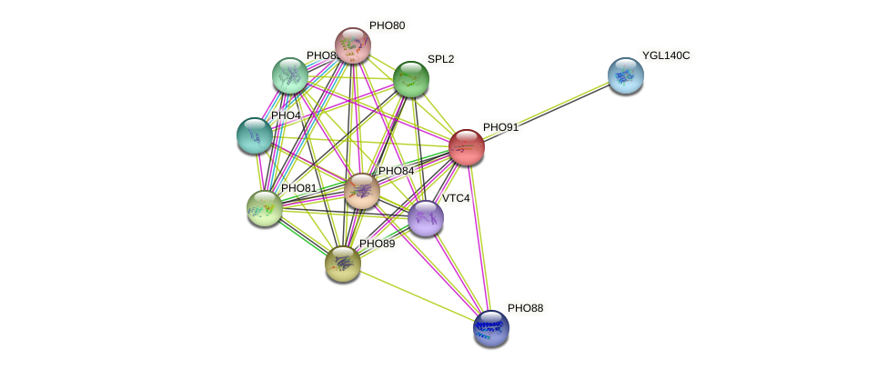 PHO91 protein (Saccharomyces cerevisiae) - STRING interaction network