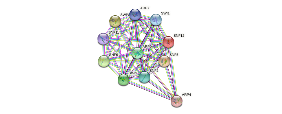 SNF12 protein (Saccharomyces cerevisiae) - STRING interaction network