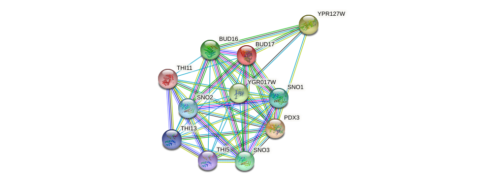 BUD17 protein (Saccharomyces cerevisiae) - STRING interaction network
