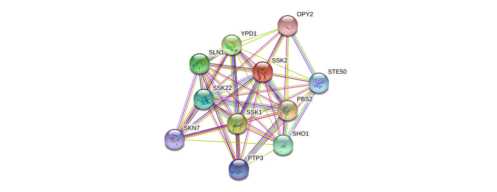 SSK2 protein (Saccharomyces cerevisiae) - STRING interaction network