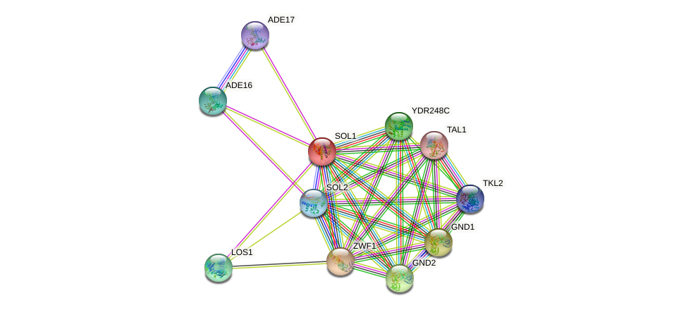 SOL1 protein (Saccharomyces cerevisiae) - STRING interaction network