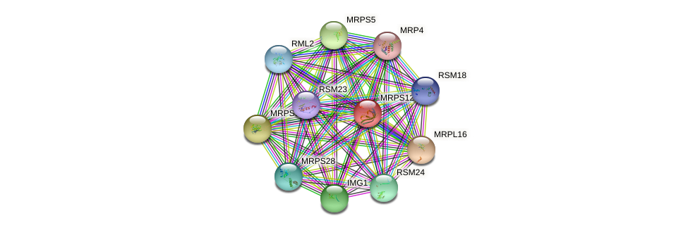 MRPS12 protein (Saccharomyces cerevisiae) - STRING interaction network
