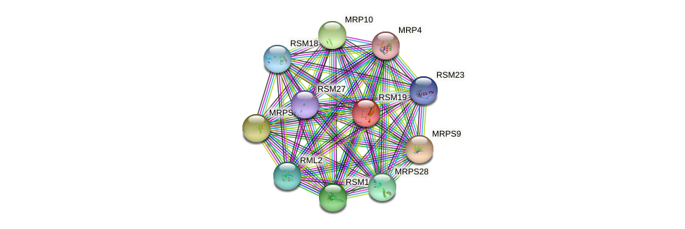 RSM19 protein (Saccharomyces cerevisiae) - STRING interaction network
