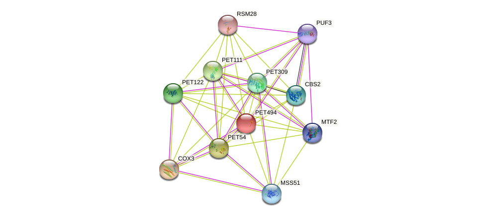 PET494 protein (Saccharomyces cerevisiae) - STRING interaction network