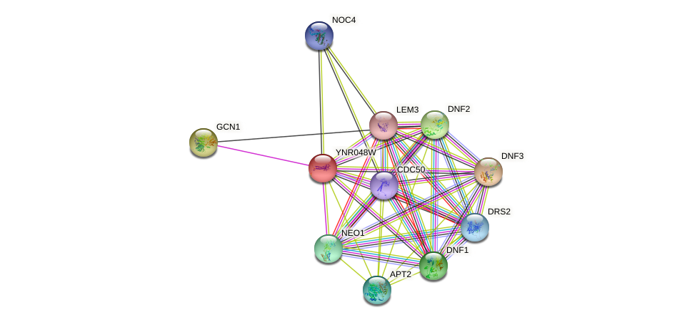 YNR048W protein (Saccharomyces cerevisiae) - STRING interaction network