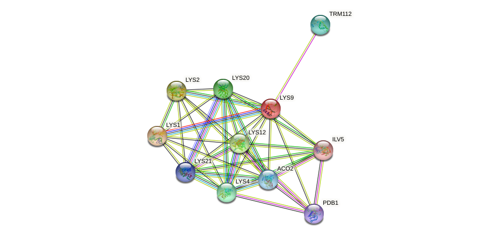 LYS9 protein (Saccharomyces cerevisiae) - STRING interaction network