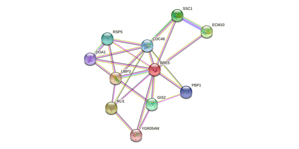 BRE5 protein (Saccharomyces cerevisiae) - STRING interaction network