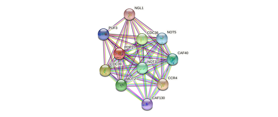POP2 protein (Saccharomyces cerevisiae) - STRING interaction network
