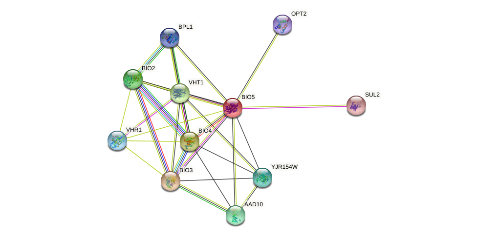BIO5 protein (Saccharomyces cerevisiae) - STRING interaction network
