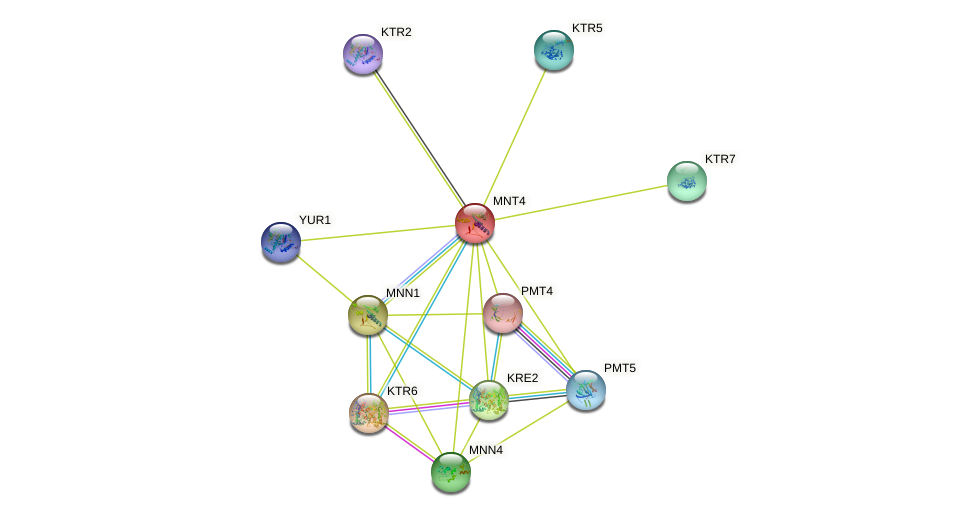 MNT4 protein (Saccharomyces cerevisiae) - STRING interaction network