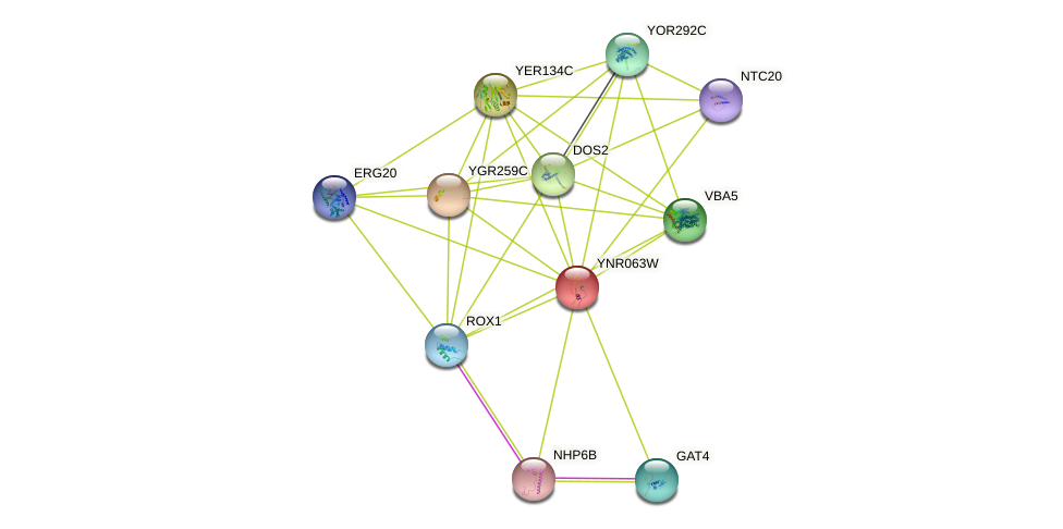 YNR063W protein (Saccharomyces cerevisiae) - STRING interaction network