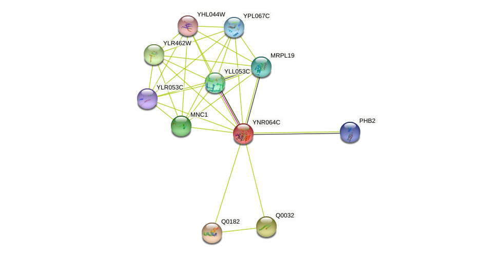 YNR064C protein (Saccharomyces cerevisiae) - STRING interaction network