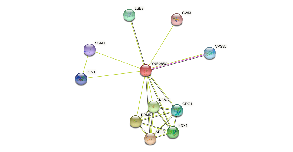 YNR065C protein (Saccharomyces cerevisiae) - STRING interaction network