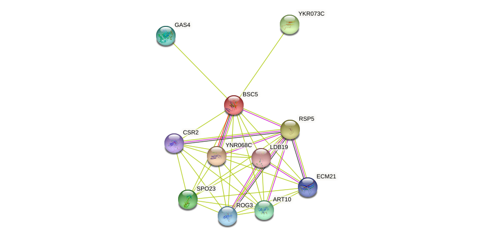 BSC5 protein (Saccharomyces cerevisiae) - STRING interaction network