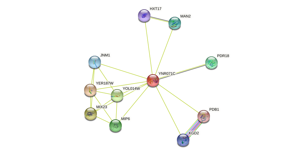 YNR071C protein (Saccharomyces cerevisiae) - STRING interaction network