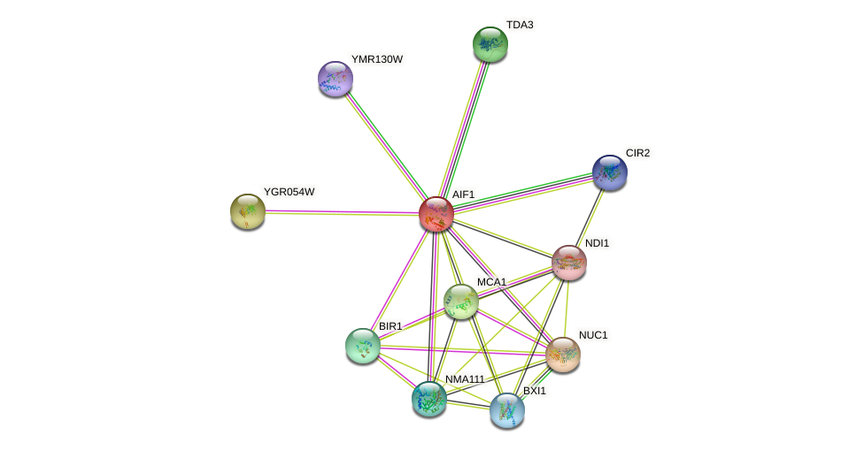 AIF1 protein (Saccharomyces cerevisiae) - STRING interaction network