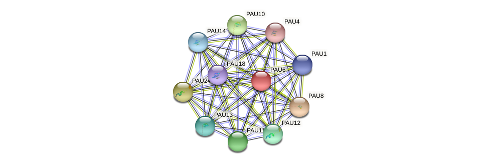 PAU6 protein (Saccharomyces cerevisiae) - STRING interaction network