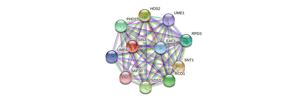 SIN3 protein (Saccharomyces cerevisiae) - STRING interaction network