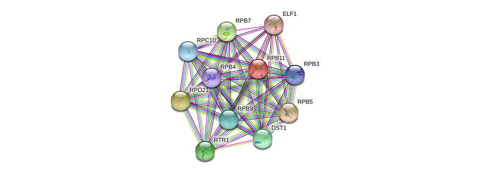 RPB11 protein (Saccharomyces cerevisiae) - STRING interaction network