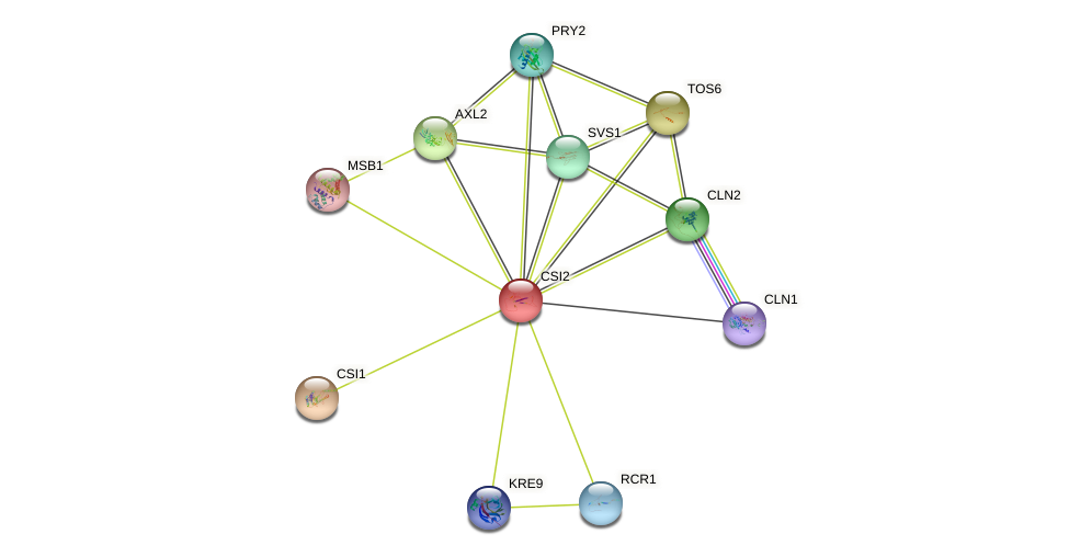 CSI2 protein (Saccharomyces cerevisiae) - STRING interaction network