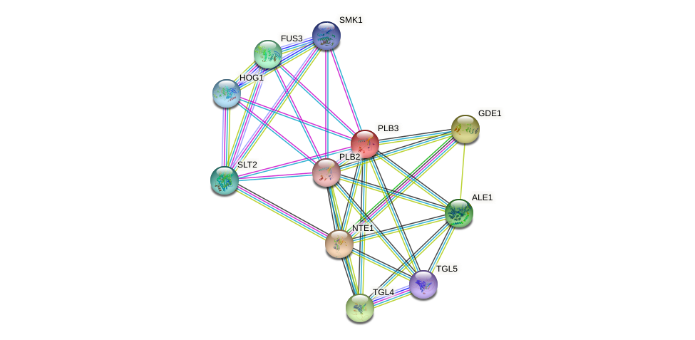 PLB3 protein (Saccharomyces cerevisiae) - STRING interaction network