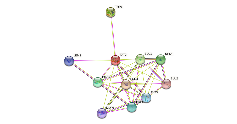TAT2 protein (Saccharomyces cerevisiae) - STRING interaction network