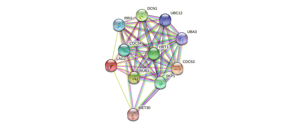 LAG2 protein (Saccharomyces cerevisiae) - STRING interaction network