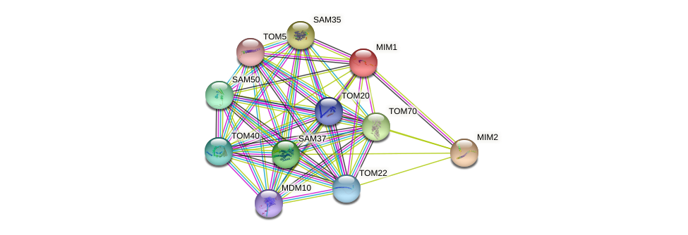 MIM1 protein (Saccharomyces cerevisiae) - STRING interaction network