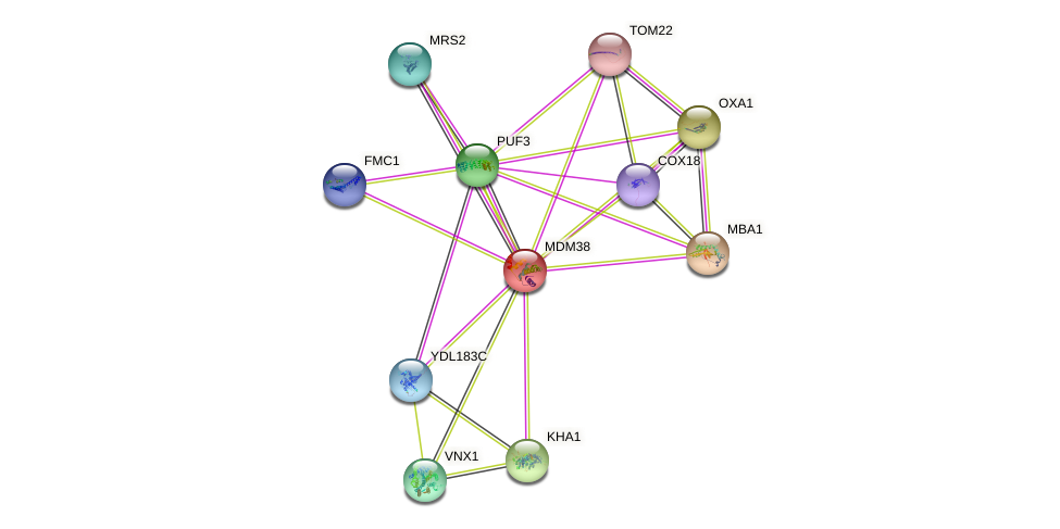 MDM38 protein (Saccharomyces cerevisiae) - STRING interaction network