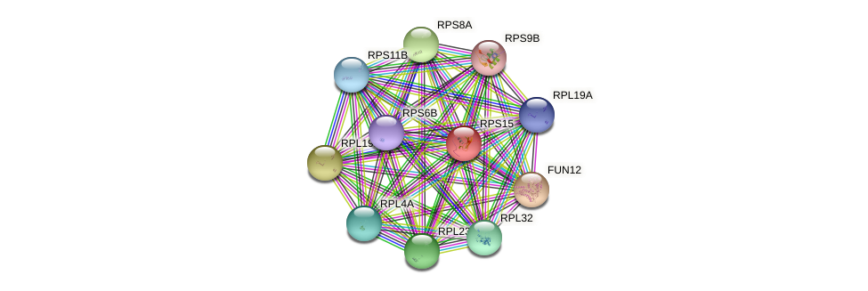 RPS15 protein (Saccharomyces cerevisiae) - STRING interaction network