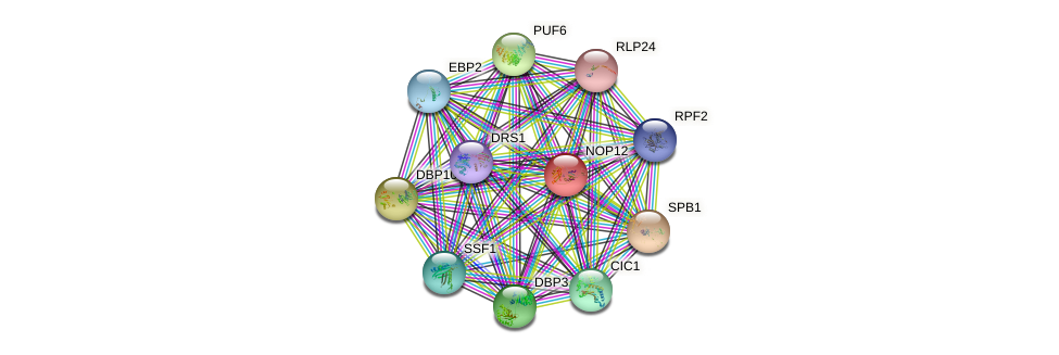NOP12 protein (Saccharomyces cerevisiae) - STRING interaction network