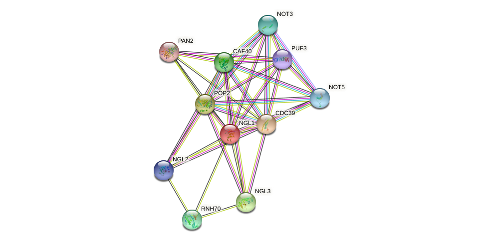 NGL1 protein (Saccharomyces cerevisiae) - STRING interaction network