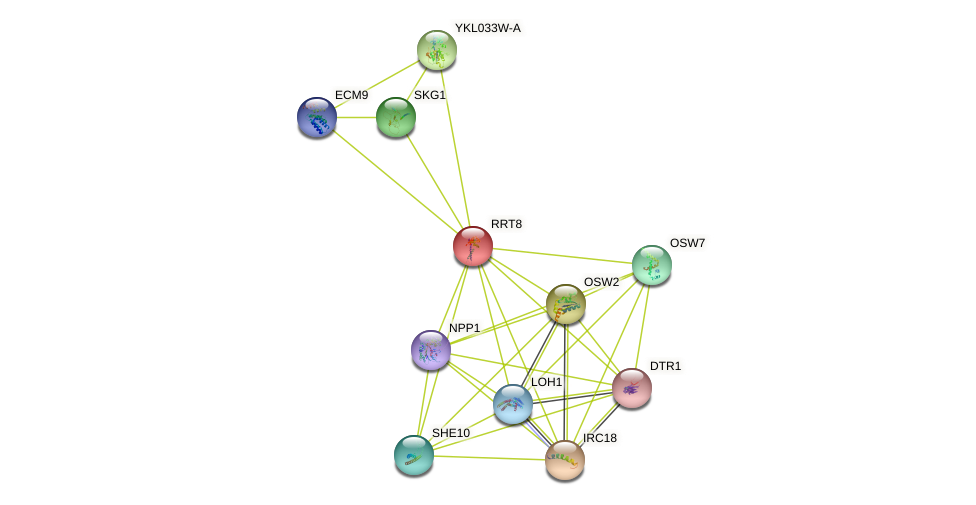 RRT8 protein (Saccharomyces cerevisiae) - STRING interaction network