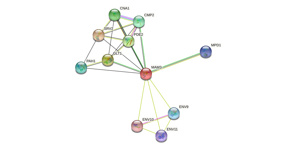 MAM3 protein (Saccharomyces cerevisiae) - STRING interaction network