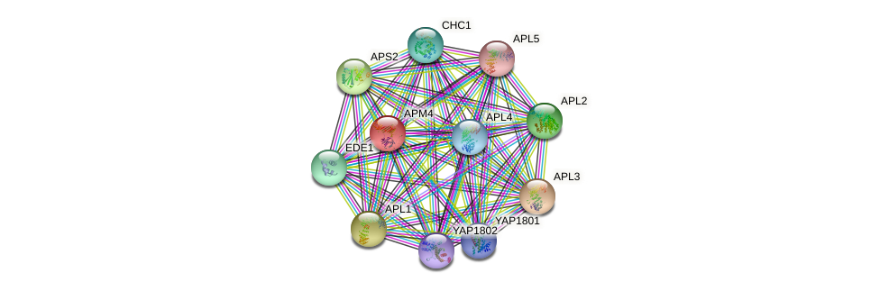 APM4 protein (Saccharomyces cerevisiae) - STRING interaction network