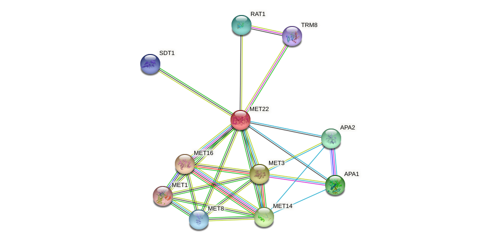 MET22 protein (Saccharomyces cerevisiae) - STRING interaction network