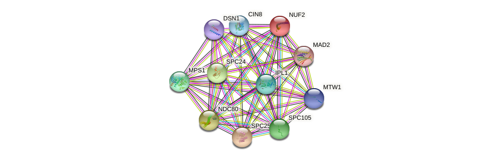 NUF2 protein (Saccharomyces cerevisiae) - STRING interaction network