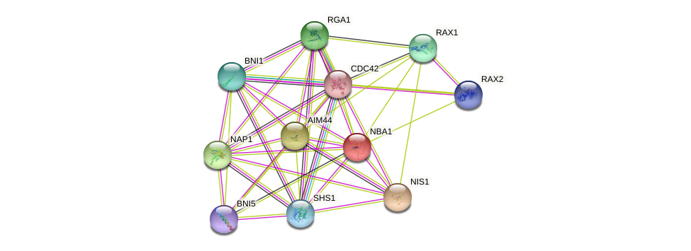NBA1 protein (Saccharomyces cerevisiae) - STRING interaction network