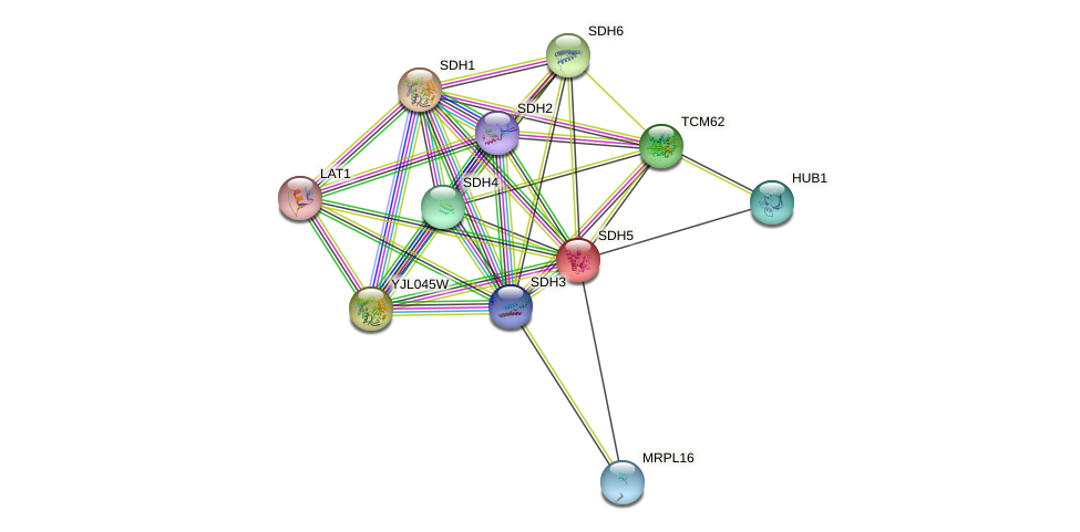 SDH5 protein (Saccharomyces cerevisiae) - STRING interaction network
