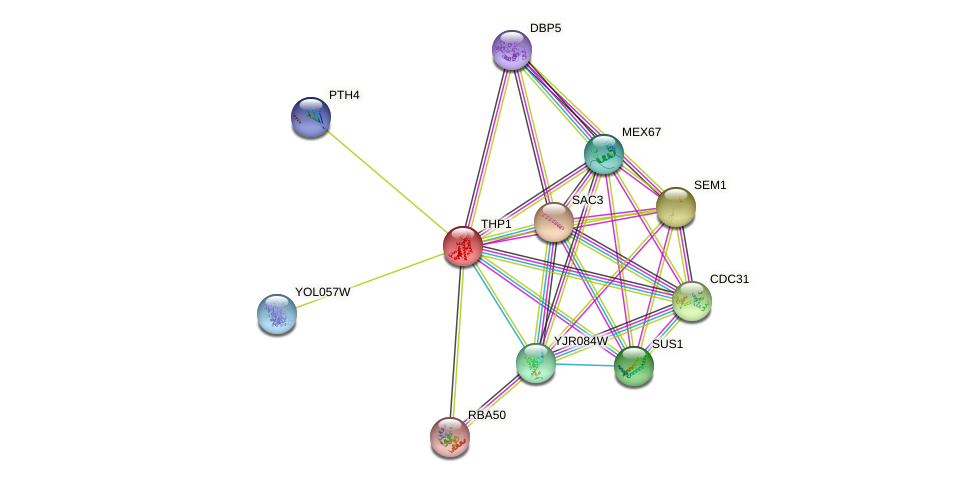 THP1 protein (Saccharomyces cerevisiae) - STRING interaction network