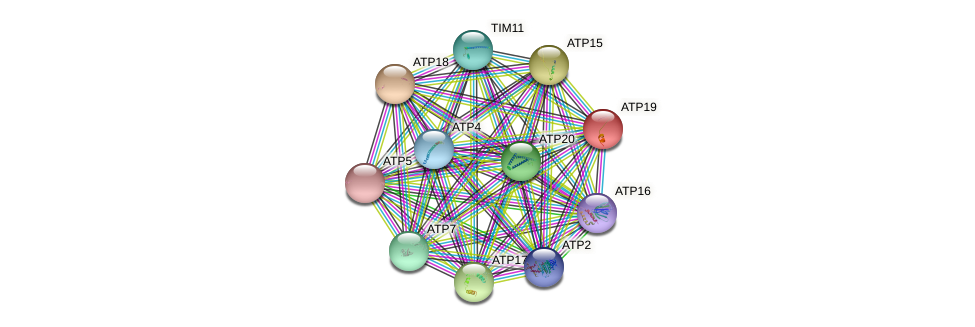ATP19 protein (Saccharomyces cerevisiae) - STRING interaction network