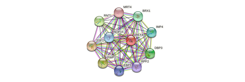 REX4 protein (Saccharomyces cerevisiae) - STRING interaction network